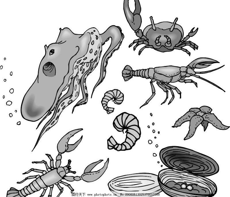 海生物 海洋 生物 生物世界 海洋生物 矢量图库   cdr