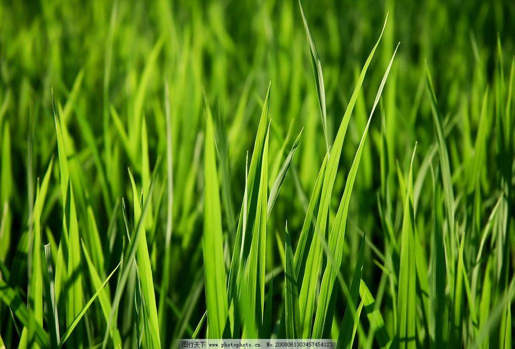 壁纸 成片种植 风景 植物 种植基地 桌面 1024_695