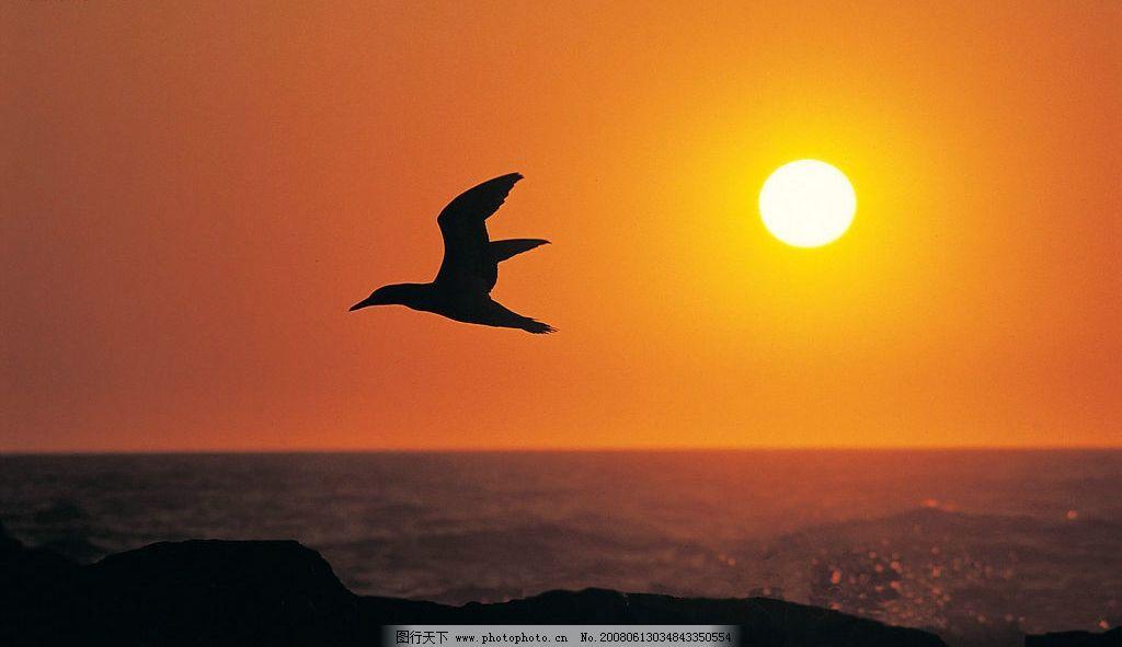 日落 大海 大雁 黄昏 海水 太阳 沙堆 自然景观 自然风景 风景