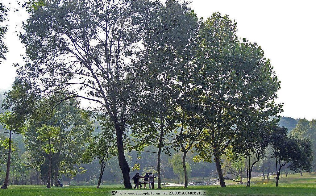 树景 公园 自然景观 山水风景 摄影图库