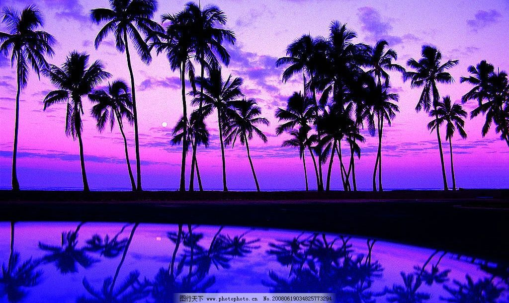 海边浪漫夕阳 海 海边 海南 浪漫 夕阳 紫色 椰树 风景 自然风景 大幅