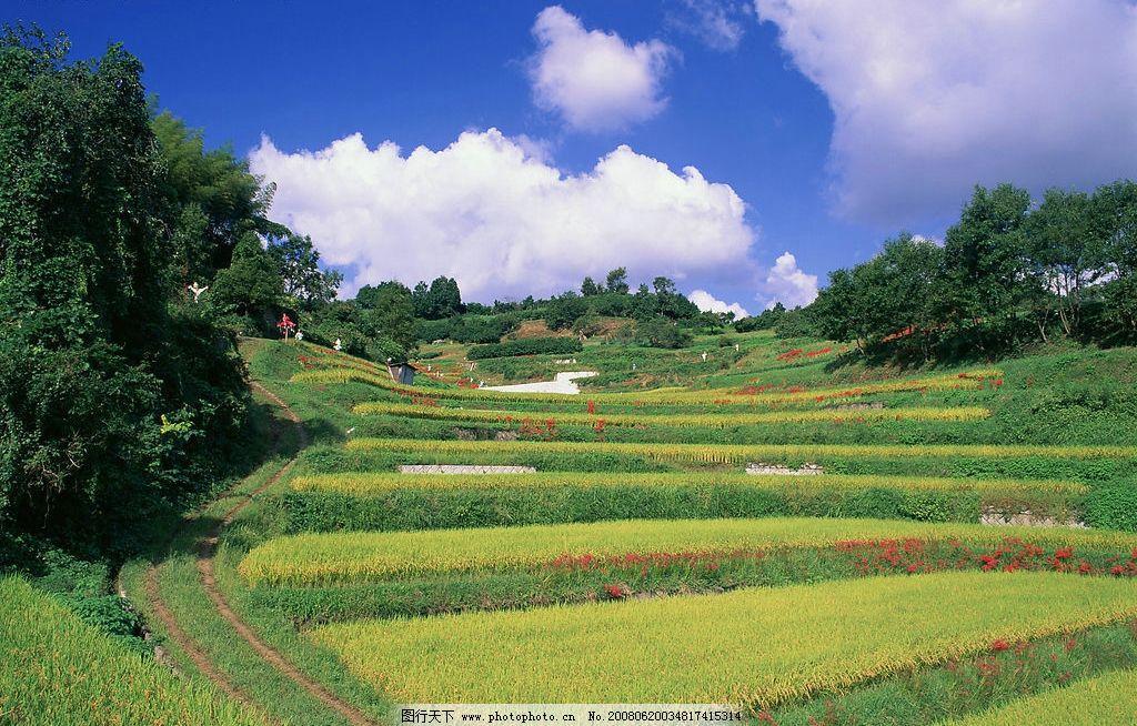 美丽田园 风光 自然景观 自然风景 摄影图库 350 jpg