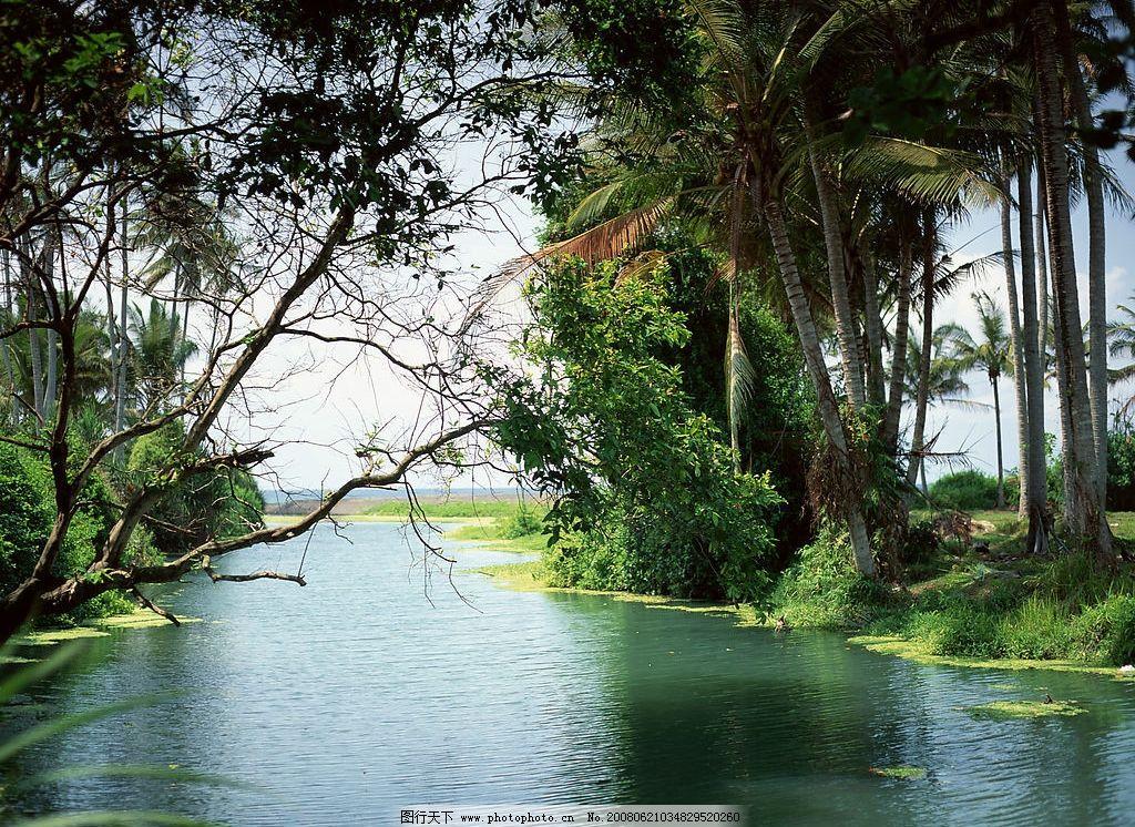 绿荫流水美景 绿树 椰子树 风景 高清风景 小河 蓝天 摄影图库