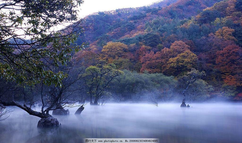 树木丛林 树木 湖 水 山 雾 丛林 美丽丛林 自然景观 自然风景 风景