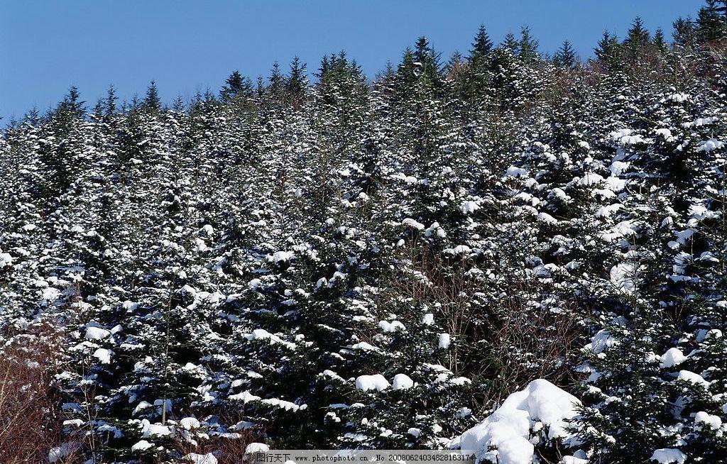 冬天 雪 山 白雪 树林 松树 雪地 山林 自然景观 自然风景 摄影图库