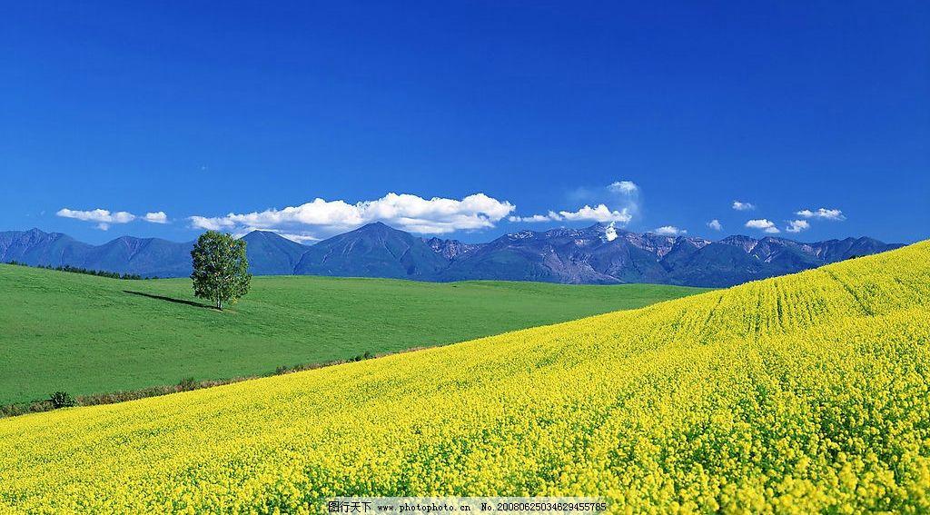日本北海道田园风景图片