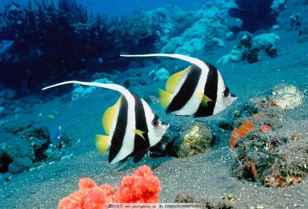 摄影图库 自然景观 自然风景  海底鱼图 海底动物 鱼类 贝类 珊瑚
