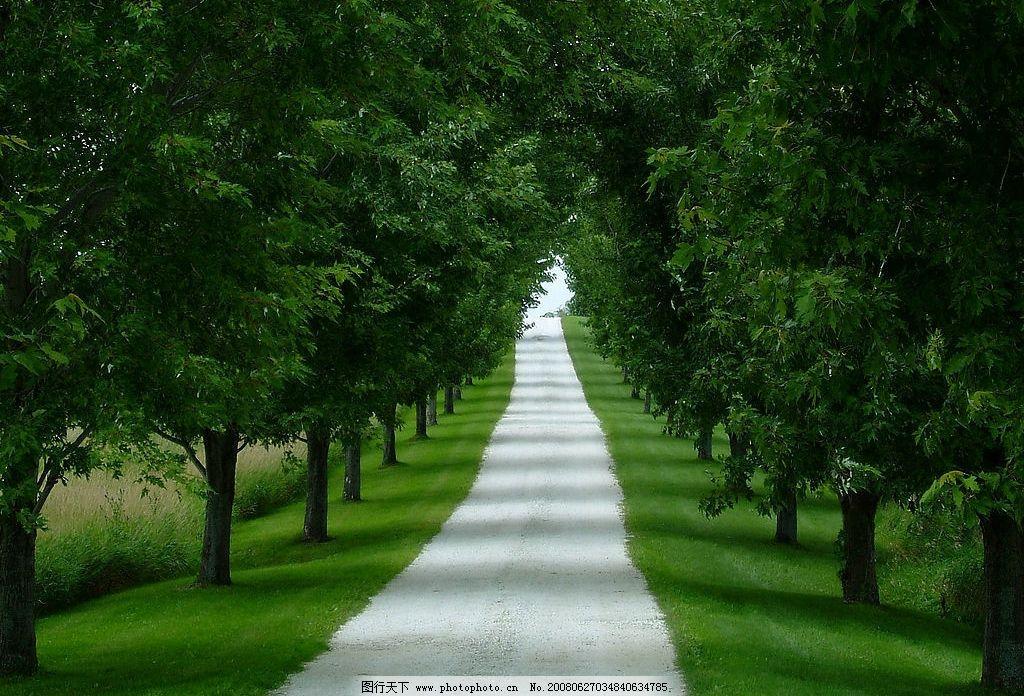 林荫小道 景色 小道 树林 绿色 自然景观 自然风景 摄影图库 72 jpg
