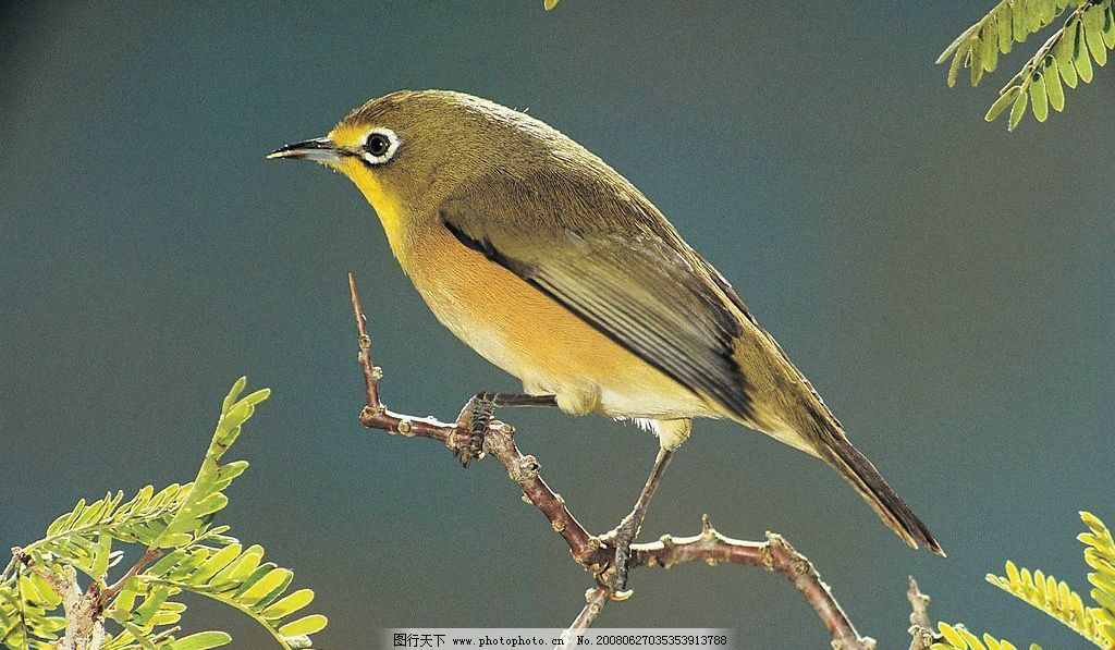 小鸟 站在树枝上的小鸟 摄影图库