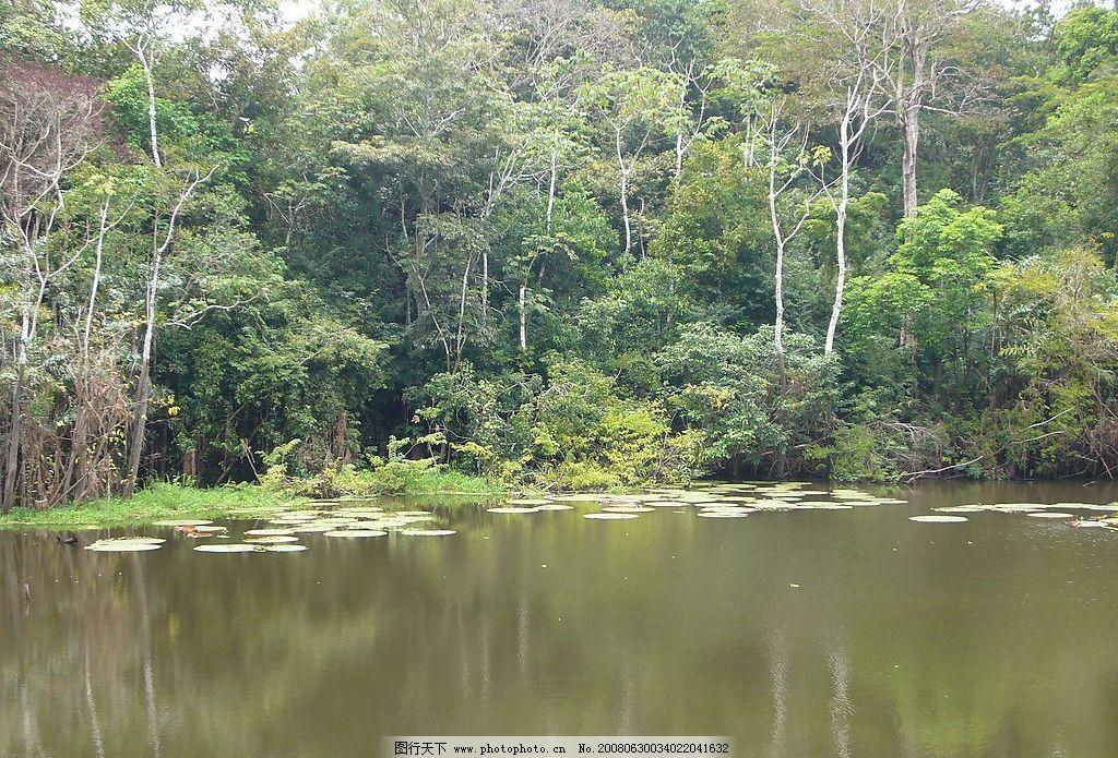 原始森林中的水面 热带雨林 水面 亚马逊河 旅游摄影 国外旅游 摄影