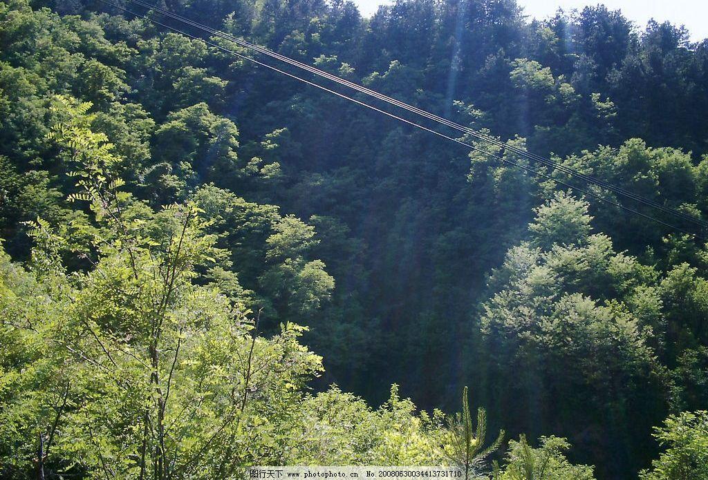 阳光森林 阳光 森林 树林 绿叶 自然景观 山水风景 摄影图库 72 jpg