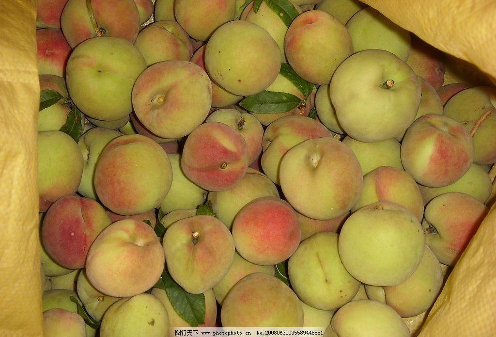 桃子 鲜桃 生物世界 水果 摄影图库 96 jpg